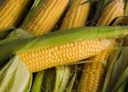 Спасем кукурузу