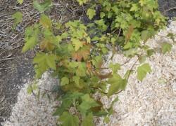 Выращивайте почву – ягоды вырастут сами