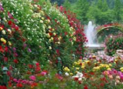 Как оставить цветы без полива и не погубить?