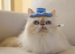 Заразили кота орви?