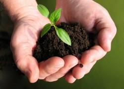 Восстанавливаем плодородие почвы в саду