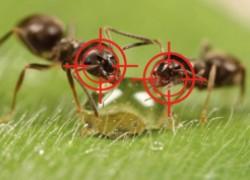 Очень эффективный способ борьбы с муравьями