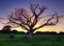 Если дерево не нужно... Что делать?
