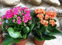 5 неприхотливых комнатных растений