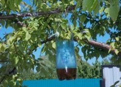 Ловушка для ос из бутылки своими руками