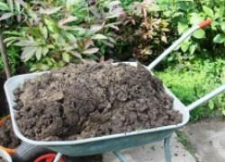 Подкормки сада для «обломного» урожая