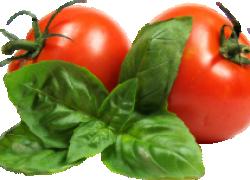 Самый скороспелый томат