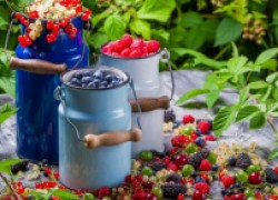 Сад – здоровья клад