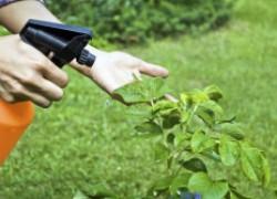 Агрохимикаты и пестициды: не надо бояться