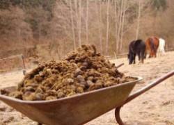Российским аграриям придется платить налог на навоз и помет
