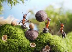 Мои надежные способы борьбы с садовыми муравьями
