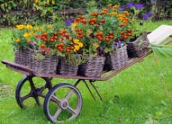 Плетень как элемент декора в саду