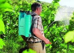 Схемы защиты виноградной лозы от болезней