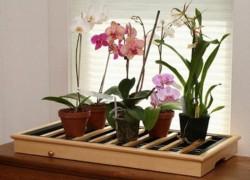 Возможно ли спасти мою орхидейку?