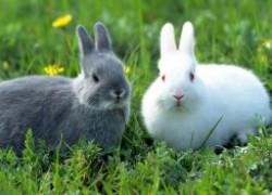 Жара и кролик