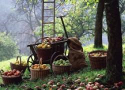 Саду хороший уход – и вредитель не подойдет