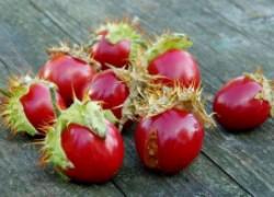 Личи – колючий помидор растет и в средней полосе