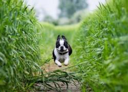 Летняя «радость» для собак