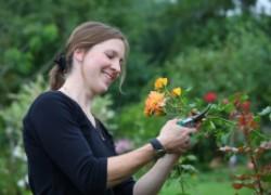 Июль - пора санитарной обрезки роз после цветения