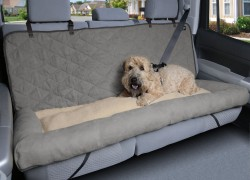 С собакой в автомобиле
