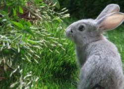 Трава в кроличьем рационе