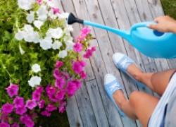 Петунии в июле нужно много питания и воды