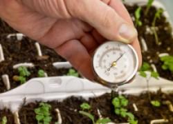 Когда сеять семена на рассаду