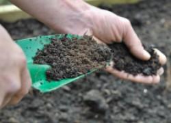 Гумус – гарант плодородия вашей почвы
