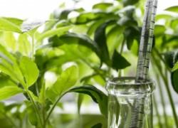 Стимуляторы для семян, которые нужно закупить заранее
