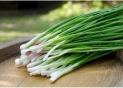 Выращиваю зеленый лук в пакетах