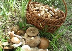 Жителей Воронежской области оштрафовали за сбор ягод и грибов