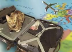 Едем в отпуск! Как быть с домашней кошкой?
