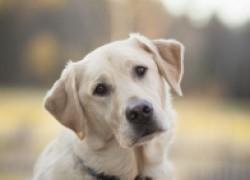 Когда можно вязать собаку?