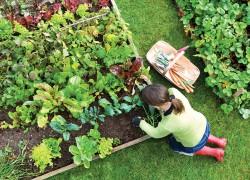 Не делаю из работы в своем саду подвиг. Работаю себе в удовольствие