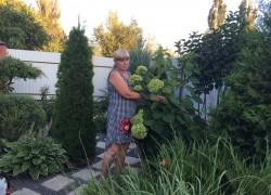 Елена Самохвалова: мое увлечение декоративными растениями переросло в мини-бизнес