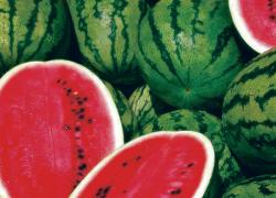 Что нужно для получения хорошего урожая арбузов