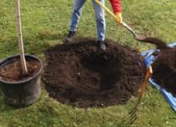 Правильные ямы для плодовых деревьев