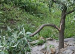 Что делать с поломанными деревьями