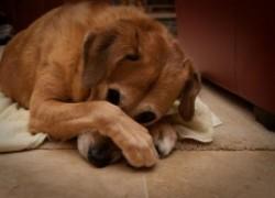 Дурной запах от собаки. В чем причины?