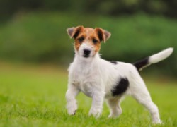 Деликатная проблема у щенка