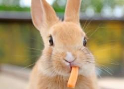 Почему у кроликов растут слишком длинные зубы