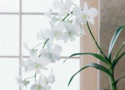 Три самых легких в уходе орхидеи