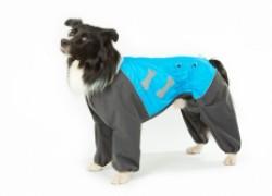 Экипировка собак в холодное время года