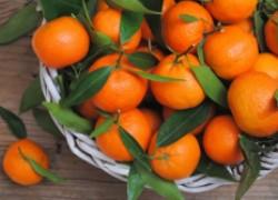 Где растут самые вкусные мандарины