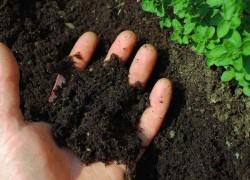 Кому кисло? Повышение плодородия кислых почв