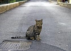 Кошка рядом с домом