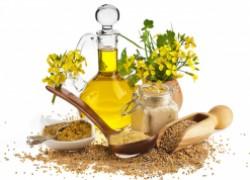 Горчичное масло – лечебный продукт