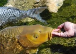 Как я зарабатываю на рыбных приманках