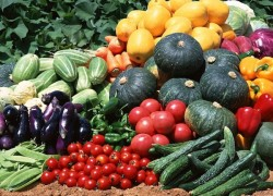 Препараты для огородных культур