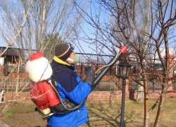 Самый полезный инструмент садовода – опрыскиватель